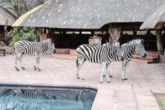 2015 - Südafrika Urlaub - 0086