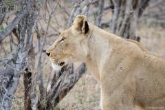 2015 - Südafrika Urlaub - 0764